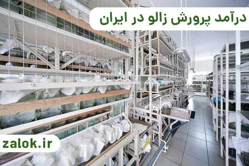 درآمد پرورش زالو در ایران چقد است؟