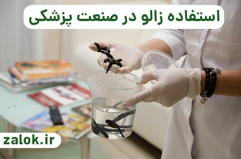 استفاده از زالو در صنعت پزشکی و زالو درمانی